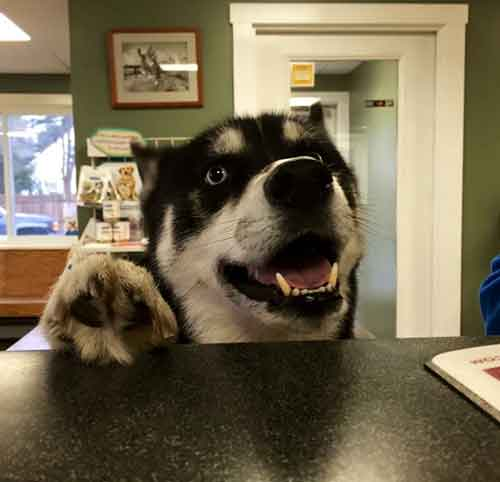 Brunswick Veterinary Clinic – Brunswick – Maine